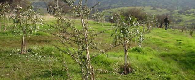 Reforestación y recuperación de espacios degradados